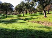 variedad especies mejora regeneración bosques mediterráneos