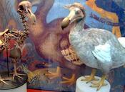 misterio pájaro Dodo