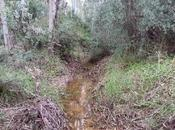 primeras lluvias otoño hacen salir anfibios... first rains autumn make amphibians...