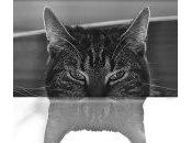 VIDEO: Gatos espejos