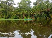 Costa Rica, pura vida(1) selva tropical