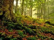 """Bosque, """"belleza natural"""""""