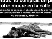 reflexión vegana acerca abandono animales nohumanos