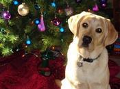 ¿Sabes regalar perro estas Navidades?