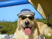 Residencias caninas para perro, opción vacaciones.