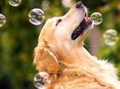 Cosas debería jugar perro