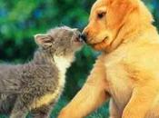 perros labradores gatos
