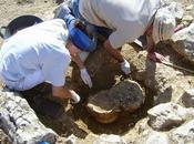 """Descubren cementerio mujeres """"alto estatus"""" necrópolis íbérica Andorra (Teruel)"""