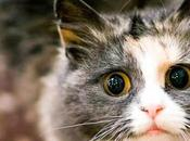 Mascotas volvieron casa desde distancias increíbles