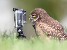 Animalitos curiosos cámaras fotográficas