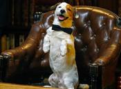 Pancho, perro millonario