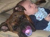 Perros poniendo bebés dormir