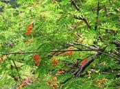 bosques relación nutrición.