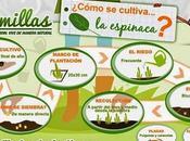 Infografía cultivo Espinaca