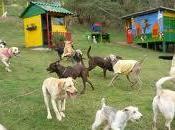 Comentario Perros amos: vacaciones separado Laura