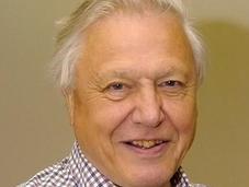 David Attenborough: humanidad puede entrar peligro extinción