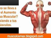 Entendiendo Músculos para Hacerlos Crecer