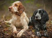 Consejos caninos 'Ene 2015'