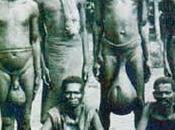 tribu cojonuda