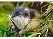 Conferencia biodiversidad Nagoya