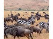 Vida salvaje africana: Safari Kenia Tanzania