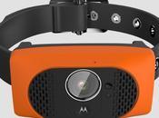 Motorola Scout 5000, nuevo gadget para perros bien