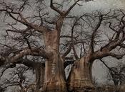 Quienes amamos árboles sabemos nuestros hermanos vegetales mucho tienen para decirnos tenemos aprender. árbol anclado pachamama nutrido ella transmite sabiduria escencia misma v...