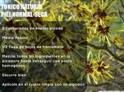 tónicos naturales caseros base hierbas
