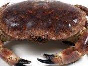 Mariscos: Crustáceos cuerpo corto