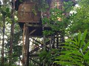 Sonidos Borneo