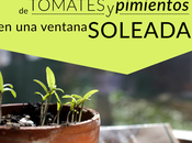 #Tip Siembra tomates pimientos Enero