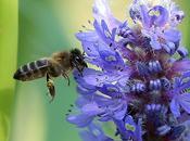 Reducción variedad flores mata abejas Reduction flower kills bees.