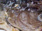 Receta gallega: empanada maruca