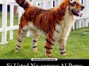 pisándole cola tigre