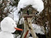 Claves para alimentación invernal aves