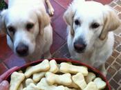 Galletas perrunas comida para perros