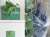 motivos tener plantas casa