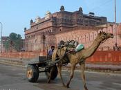 Bikaner, ciudad roja Rajasthán