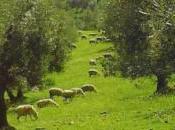 Ayudas olivar ecológico, Junta Andalucía rectifica