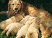 Ejercicios Para Desarrollo Cachorro