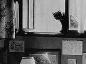 gatos Willy Ronis