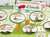 Infografía cultivo tomate Semillas Huerta Jardín