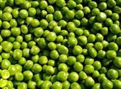Cómo cultivar guisantes