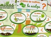Cultivo Acelga. Infografía