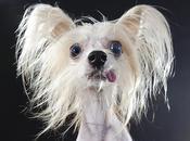 Retratos cómicos perros pelo Sophie Gamand
