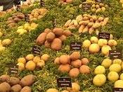 Patatas: trabajar justo