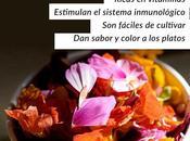 SEMANAL Cultiva flores comestibles