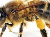 ¿Qué abeja? What Bee?