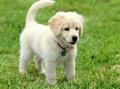 Formas Excelentes Consentir Perro