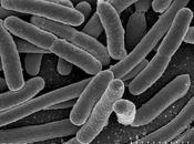 Nuevos indicios relación flora intestinal Parkinson.